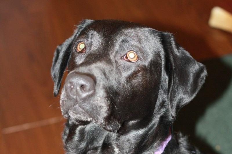 jojo-the-dog